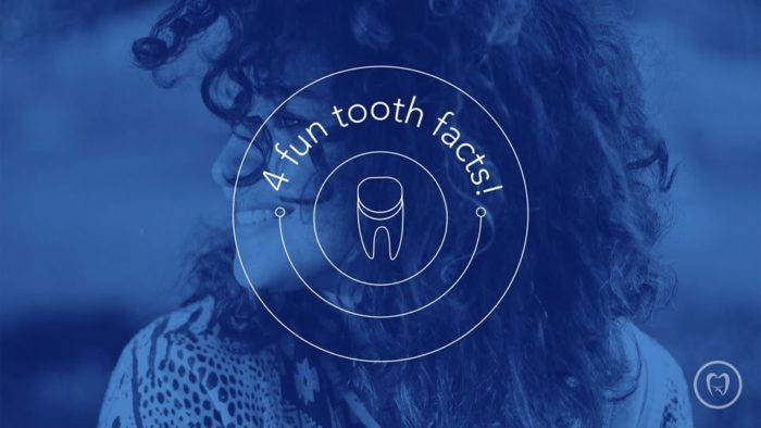 4 Fun Tooth Facts